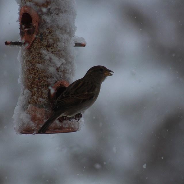 Winter+takes+over+social+media