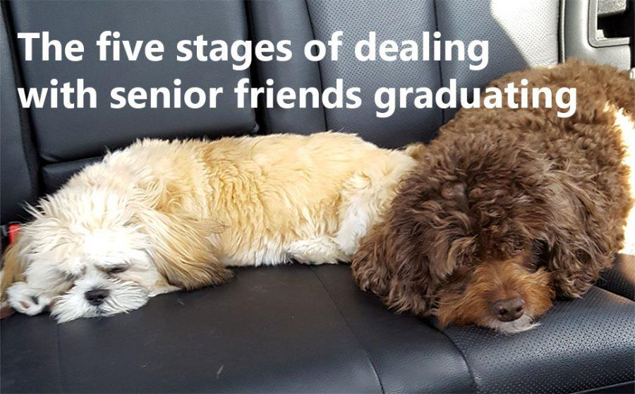 5 stages of dealing with friends who are graduating