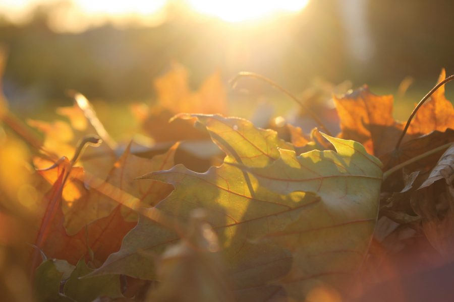 Quiz: What fall symbol are you?