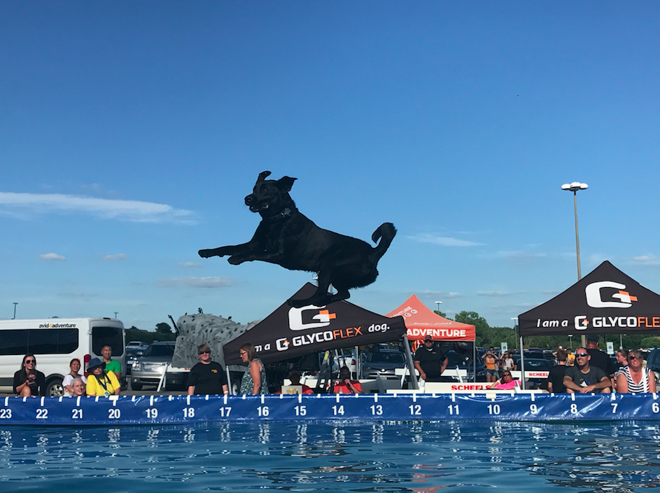 A+dog+mid+air+in+Big+Air+Finals.%0A