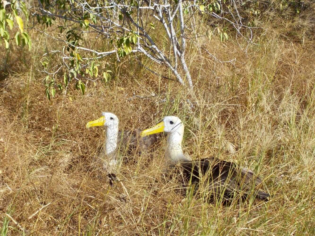 Two birds rest together on the islands. Photo from Bailey Raso.