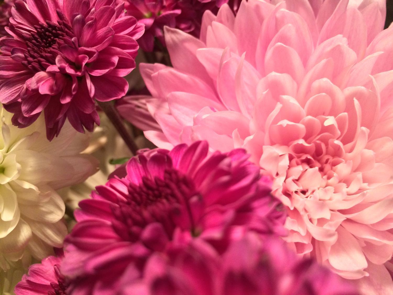Seasonal Crossword Spring West Side Story