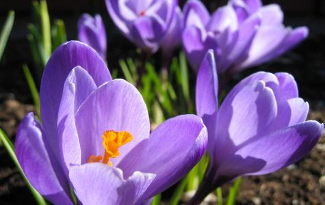 Top 4 spring activities