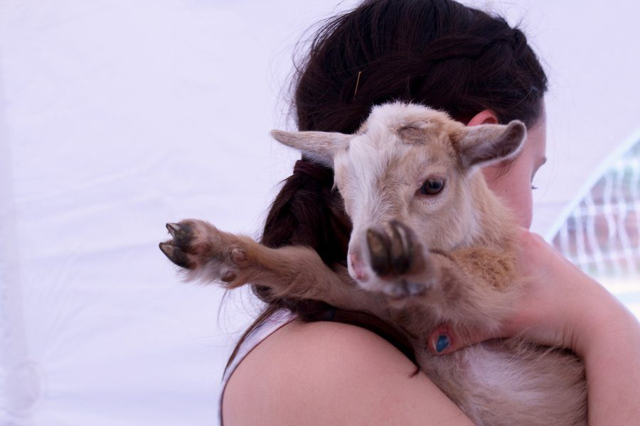 After yoga is done, WSS staffer Natalie Dunlap holds one of the goats.