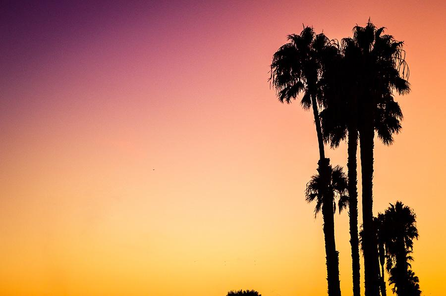 A silhouette of palm trees on Venice Beach, against a vibrant pink and orange sunset sky. Photo used with permission from Unsplash.com.