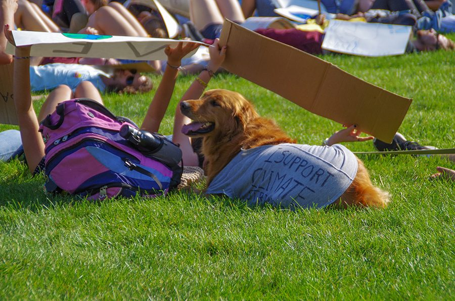 Even dogs participated in the die-in. This golden retriever is wearing a shirt that says, I support climate strikers.