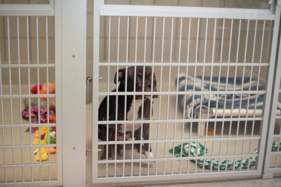 Bella, one of the dogs at the shelter, stares at her surroundings.