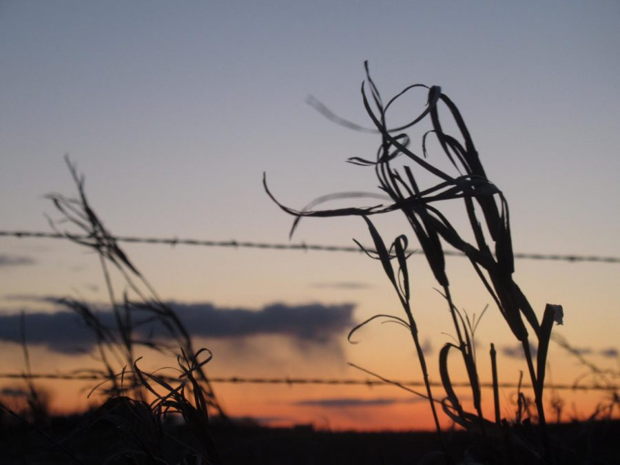 A beautiful spring sunset with a plant silhouette to finish off the night.