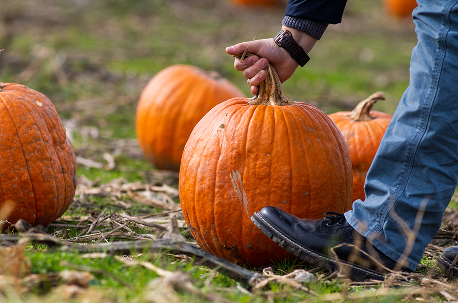 For many students, carving pumpkins is an essential part of Halloween.
