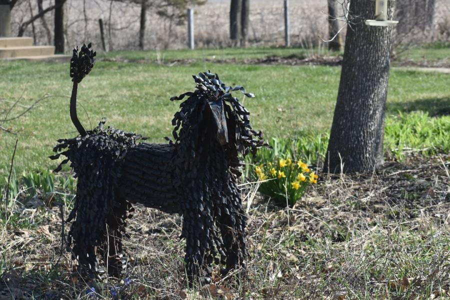 In memory of Maggie, the labradoodle that took over everyones hearts and got a restaurant named after her, this metal statue stands. Every visitor who comes to the farm sees it as soon as they drive in, so they know whose farm they are on now.