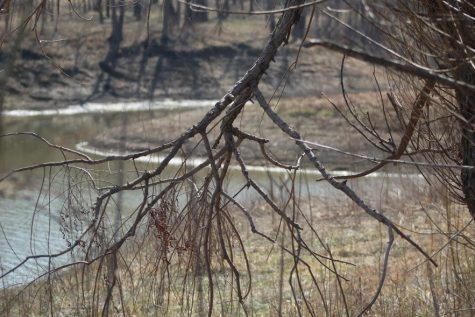 Nature is The Best Art- Twisted branches, naked from winter's rasp, come the buds of spring.